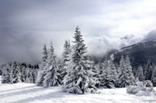 Free Winter Stock Images - 15047114