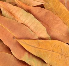Free Leaves Stock Photos - 15047133