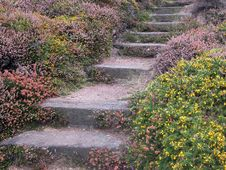 Free Coastal Path On Jersey Stock Photo - 15047190