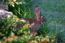Free Rabbit Stock Image - 15047451