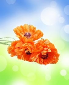 Abstract Background With Poppies Stock Images