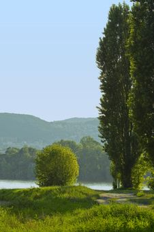 Trees In The Bank Of River Danube Stock Image