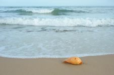 Free Sea And Conch Royalty Free Stock Photography - 15048497