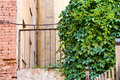 Free Ivy, Brick Wall And Fence. Stock Image - 15052311