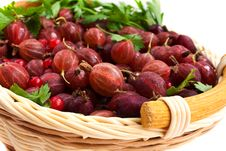 Free Red Gooseberry And A Red Currant Royalty Free Stock Photos - 15051168