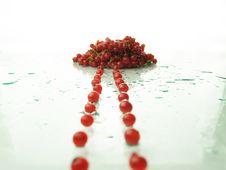 Free Gooseberry Stock Image - 15051191