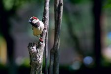 Free Sparrow Stock Photography - 15052592