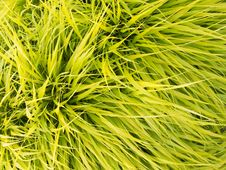 Free Green Leaves Texture Royalty Free Stock Photo - 15053235