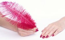 Free Hands With Pink Manicure Holding Feather Royalty Free Stock Image - 15054386