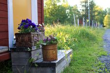 Free Pots With Flowers Royalty Free Stock Image - 15054526