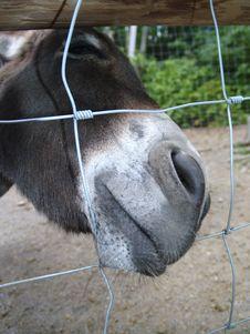 Free Mule Stock Image - 15054611
