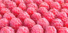 Free The Raspberry By Rows. Royalty Free Stock Image - 15056696