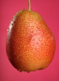 Free Fresh Pear Royalty Free Stock Photo - 15056885