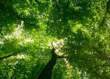 Free Forest Stock Images - 15057574