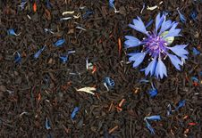 Free Cornflower On The Dry Tea Leaves Background Royalty Free Stock Images - 15058029