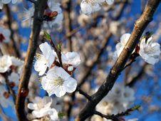 Free Bloom Stock Photos - 15059893