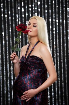 Free Pregnant Woman With Red Rose Royalty Free Stock Photo - 15060475