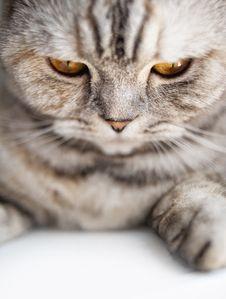 Free Beautiful Cat Stock Image - 15060491