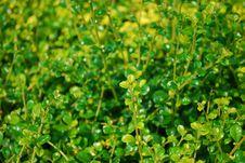 Ornamental Plants Stock Photo
