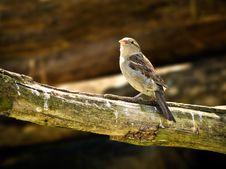 Free Little Bird Stock Photography - 15061732