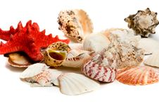 Free Seashells Royalty Free Stock Photography - 15062907