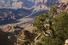 Free Canyon Tree Stock Photo - 15064140
