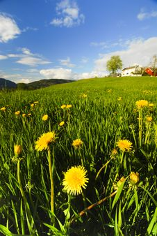 Free Yellow Hilly Flowers Stock Photography - 15064652
