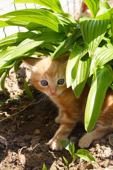Free Cute Gingery Kitten Stock Photos - 15065003