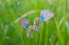 Free Butterflies On Herb Stock Photos - 15065033