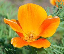 Free Glowing Flower Stock Photos - 15065143