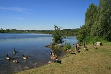 Free Landscape With Geese Stock Photo - 15065340