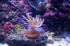 Free Hard Coral Royalty Free Stock Images - 15065859