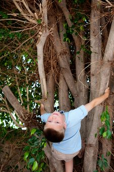 Free Tree Climbing Royalty Free Stock Photos - 15066898