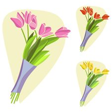 Free Tulip Flowers Stock Image - 15067421