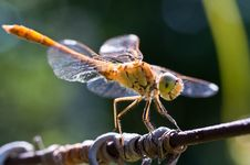Free Dragon Fly Stock Photos - 15067673