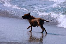 Free Dog On Beach, Puerto Escondido Stock Photo - 15068140