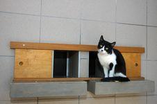 Cat On Shelf Royalty Free Stock Photography
