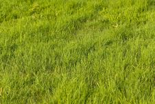 Free Green Grass On The Summer Meadow Stock Photos - 15068533