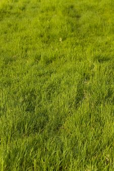 Free Green Grass On The Summer Meadow Stock Photo - 15068540