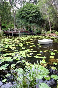 Free Lily Pond Stock Photos - 15069513