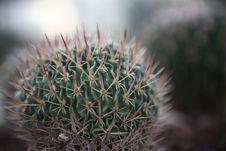 Free Cactus Stock Photography - 15069562