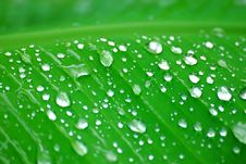 Free Water Droplets On Leaf Stock Photography - 15069782