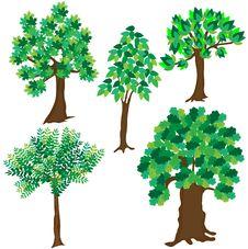 Free Green Leafy Tree On White Background Royalty Free Stock Photo - 15069995