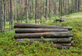 Free Logs In The Woods Royalty Free Stock Images - 15075139