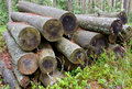 Free Logs In The Woods Stock Photography - 15075142