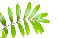 Free Fresh Green Leaf Royalty Free Stock Photo - 15070345