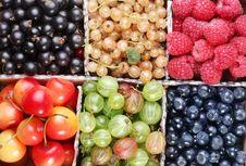 Free Clourful Berries Stock Photo - 15071530