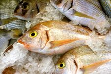 Free Fishes Stock Images - 15072004