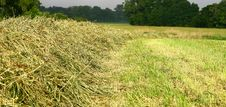 Free Hay In The Fields Royalty Free Stock Photo - 15072295