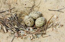 Bird S Nest With Eggs On Sand Stock Photos